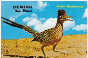 New Mexico Deming The Desert Roadrunner