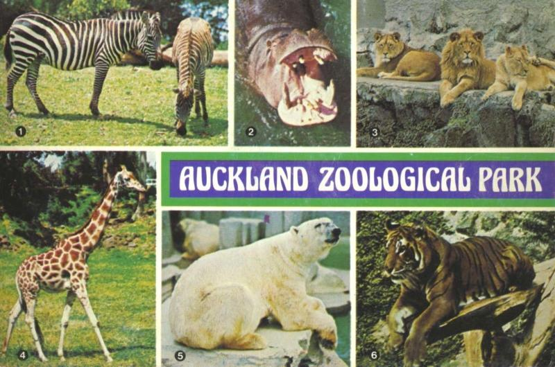 Auckland Zoological Park New Zealand NZ Zoo Multiview c1979 Unused Postcard D30