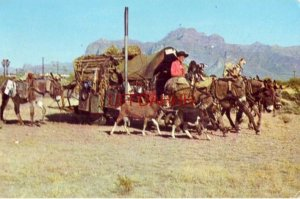 ORVILLE EWING, PRITCHETT, CO. Artist and Traveler 1961 wagon pulled by donkeys
