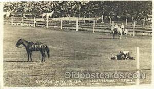 Stampede Winnepeg Western Cowboy, Cowgirl Postcard Postcards  Stampede Winnepeg
