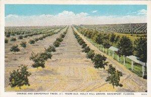 Florida Davenport Orange & Grapefruit Trees Holly Hill Groves sk4457