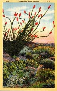 Cactus When The Desert Blooms 1947 Curteich