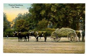 Southern Ox Team Hauling Hay