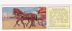Typhoo Tea Vintage Trade Card Horses 1935 No 12 Cleveland Bay