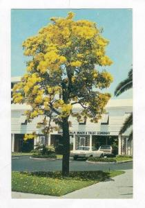 Bank Of Palm Beach & Trust Co., Palm Beach,Florida,40-60s