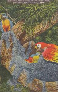 Florida Miami Colorful Macaw Family Parrot Jungle Red Road