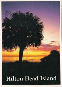 South Carolina Hilton Head Island Sunrise Behind Sabal Palmetto South Carolin...