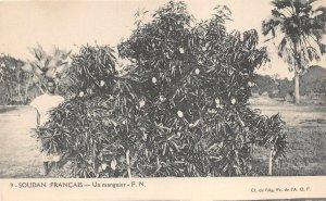 uk41998 un manguier soudan francais africa sudan