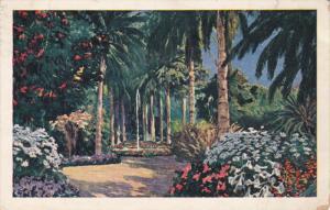 TENERIFE, Islas Canarias, Spain, 1900-1910's; Hijuela Del Jardin Botanico Oro...