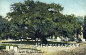 Old Oak Tree, Magnolia Cemetery -sc_charleston_0387