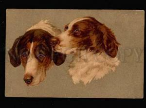 029430 Portrait of POINTERS. Vintage Embossed PC