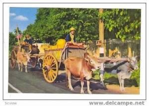 natives in Ox Carts, Northern Thailand 40-60s