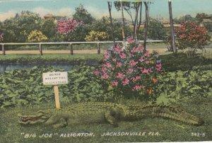 JACKSONVILLE , Florida . 00-10s ; BIG JOE Alligator