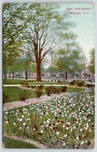 Rochester New York~Jones Square Tulips~Neighborhood Homes~c1910 Postcard