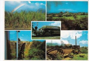 Hawaii Sugar Cane Scenes