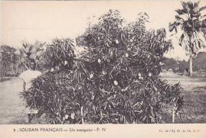 Africa Sudan Un manguier