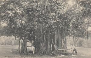 KINGSTON , JAMAICA , 1900-10s ; Banyan Tree , Kingston Park