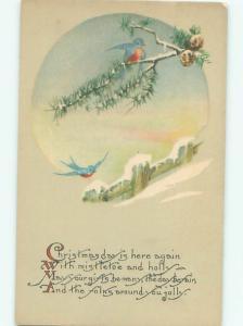 Divided-Back BIRDS SCENE Pretty Postcard AA9238