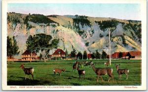 Yellowstone National Park Postcard DEER NEAR MAMMOTH Hotel View Haynes 1920s