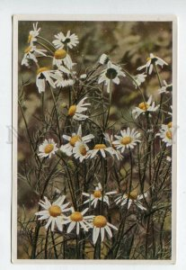 428076 Flower Matriaria inodora Vintage Sammelwerk Tobacco Card w/ ADVERTISING
