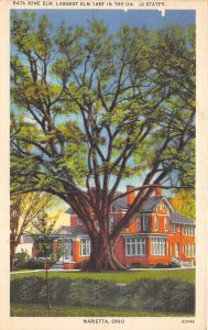 Marietta Ohio 1940s Postcard Rathbone Elm Largest Elm Tree in USA