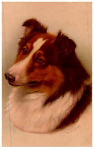 Dog  ,  Collie . artist signed W.Schwar