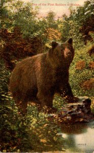Bear One Of The First settlers Of Maine 1913