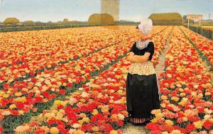 Netherlands Holland Champs de Tulipes Bulbfields Bollenvelden