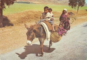 Tunisia Sur la route de Kairouan Donkey Riding