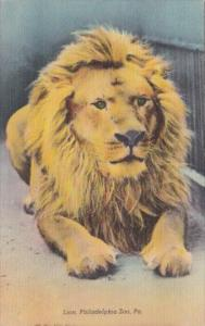 Lion King Of Beasts Philadelphia Zoo Pennsylvania