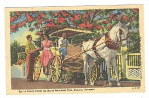 Royal Poinciana Tree, Horse Carriage, Nassau, Bahamas, 1930-1940s