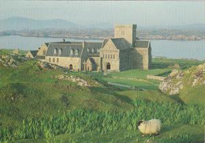 Iona Abbey Isle Of Iona Scotland