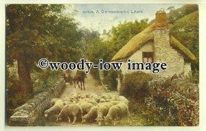 tp0522 - Devon - Sheep being Herded across a Devonshire Lane c1912 - postcard