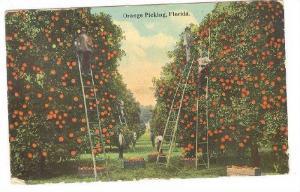 Men Picking Up Oranges, Florida, PU-1914