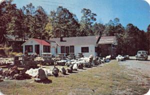 Crystal Springs Arkansas Monte Cristo Rocks Vintage Postcard K90900