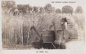 We Grow Good Wheat At Hope BC Canada Canadian Farming Real Photo Postcard