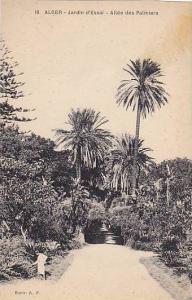 ALGER, Jardin d'Essai - Allee des Palmiers,  Algeria, 10-20s