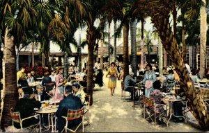 Florida Largo Palm Garden Restaurant Indian Rocks Fruit Company