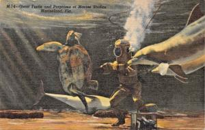 MARINELAND FL~GIANT TURTLE & PORPOISES AT MARINE STUDIO POSTCARD 1940s