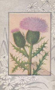 Thistle Flower , 00-10s