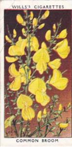 Wills Vintage Cigarette Card Wild Flowers 1936 1st Series No 3 Common Broom