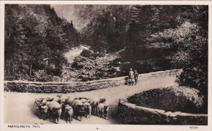 RP; ABERGLASLYN PASS, North Wales, United Kingdom, Flock of sheep, Bridge, 19...