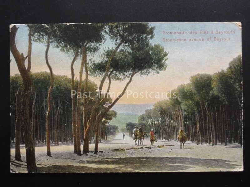 Iran / Lebanon BEIRUT / BEYROUT A Stone-Pine Avenue - Old Postcard