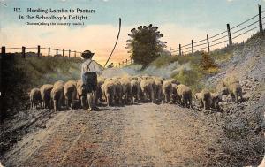 Wisconsin Country Roads~Schoolboy's Delight: Herding Lambs to Pasture~1913 PC