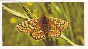 Grandee Vintage Cigarette Card British Butterflies 1984 No 7 Marsh Fritillary