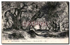 Postcard Old Cap Martin in the way Olive Trees Wood