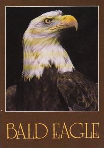 Birds The Bald Eagle