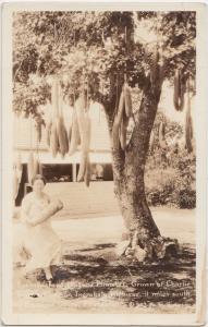 40s COCOANUT GROVE Florida Fla RPPC Postcard SAUSAGE TREE Charlie Black's Place