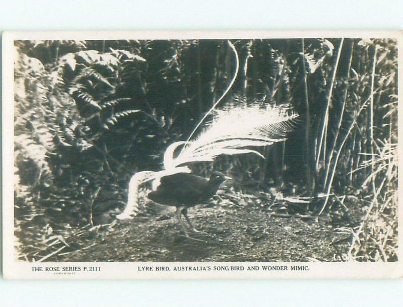 old rppc NICE VIEW Country Of Australia i1805