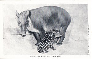 Tapir and Baby      St Louis Zoo